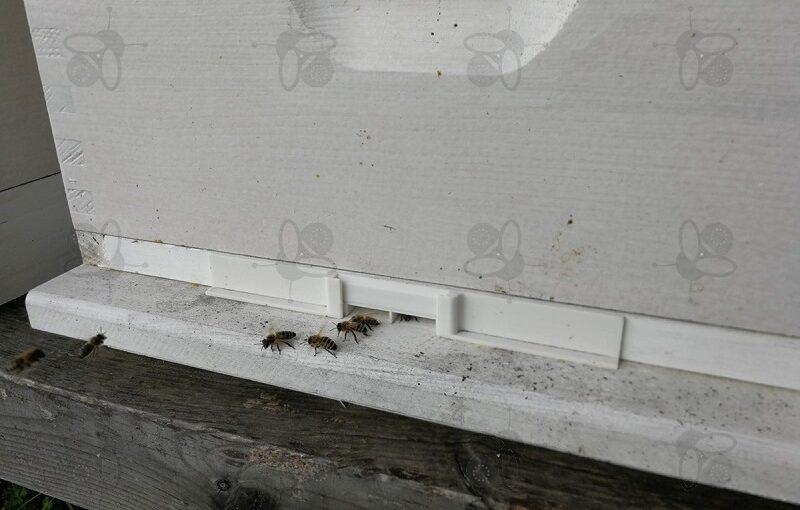 Rozbój pszczół